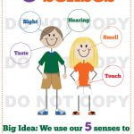 Five Senses - Kindergarten